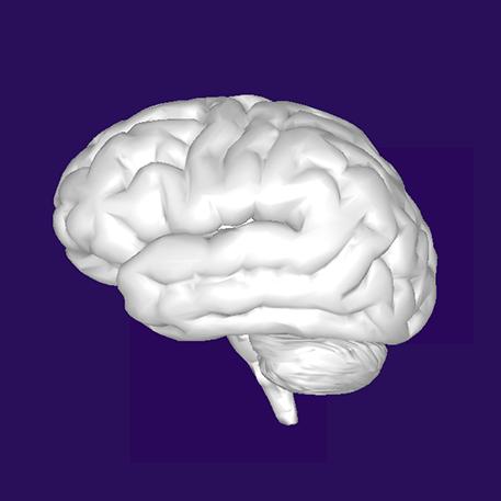 brain image